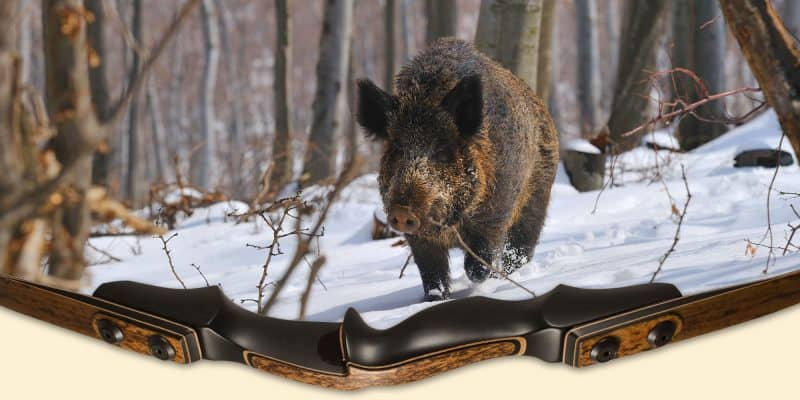 image of high quality beautiful bowhunting recurve with wild feral hog